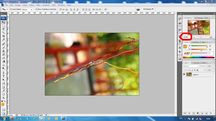 crop-image-100-01